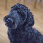 doggy-photos